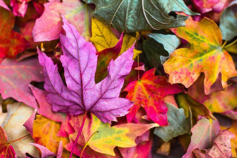 blog-como-decorar-como-preservar-hojas-naturales-3-e1475676926259