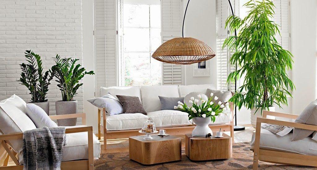 plantas-de-interior-1